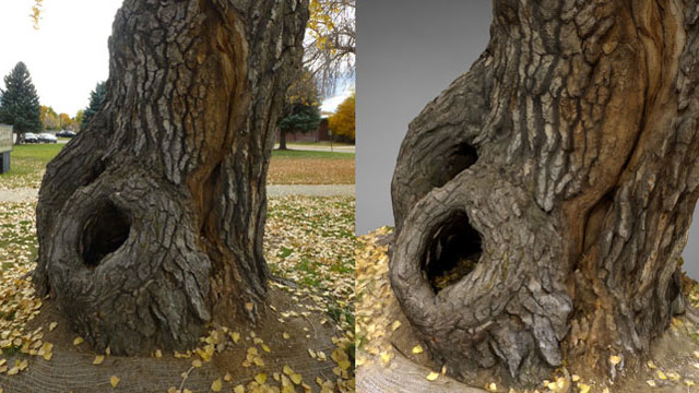 3d photo scan of tree