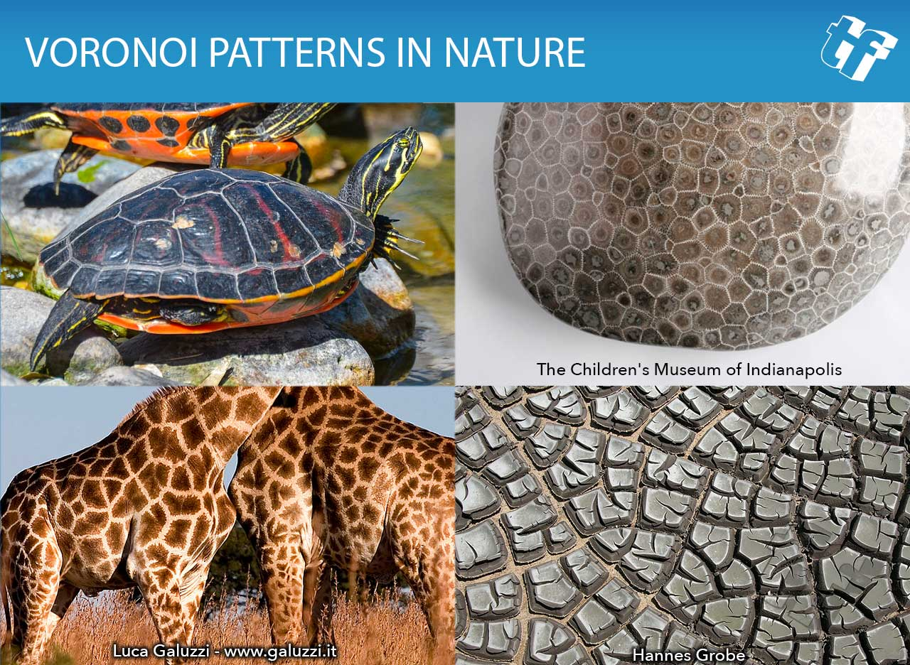 Voronoi Pattern in nature