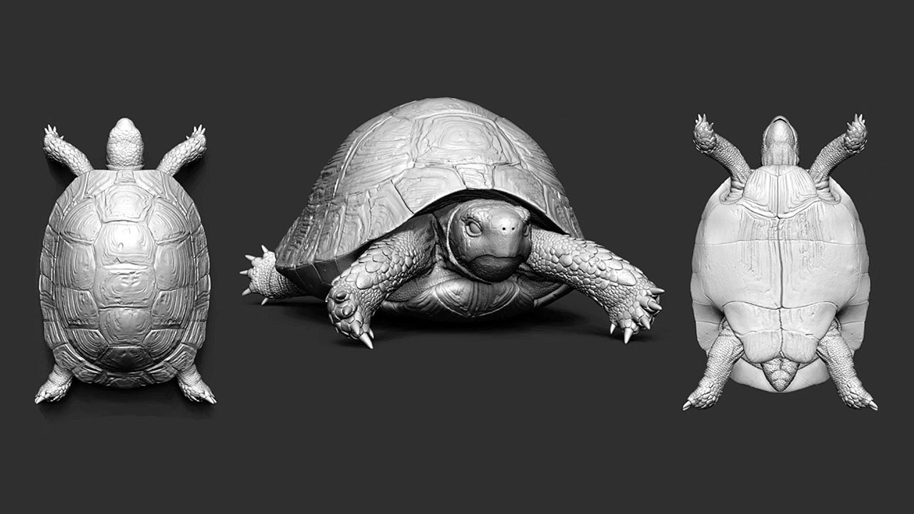 Midweek Motivations: Turtles can now dance, thanks to ZBrush!