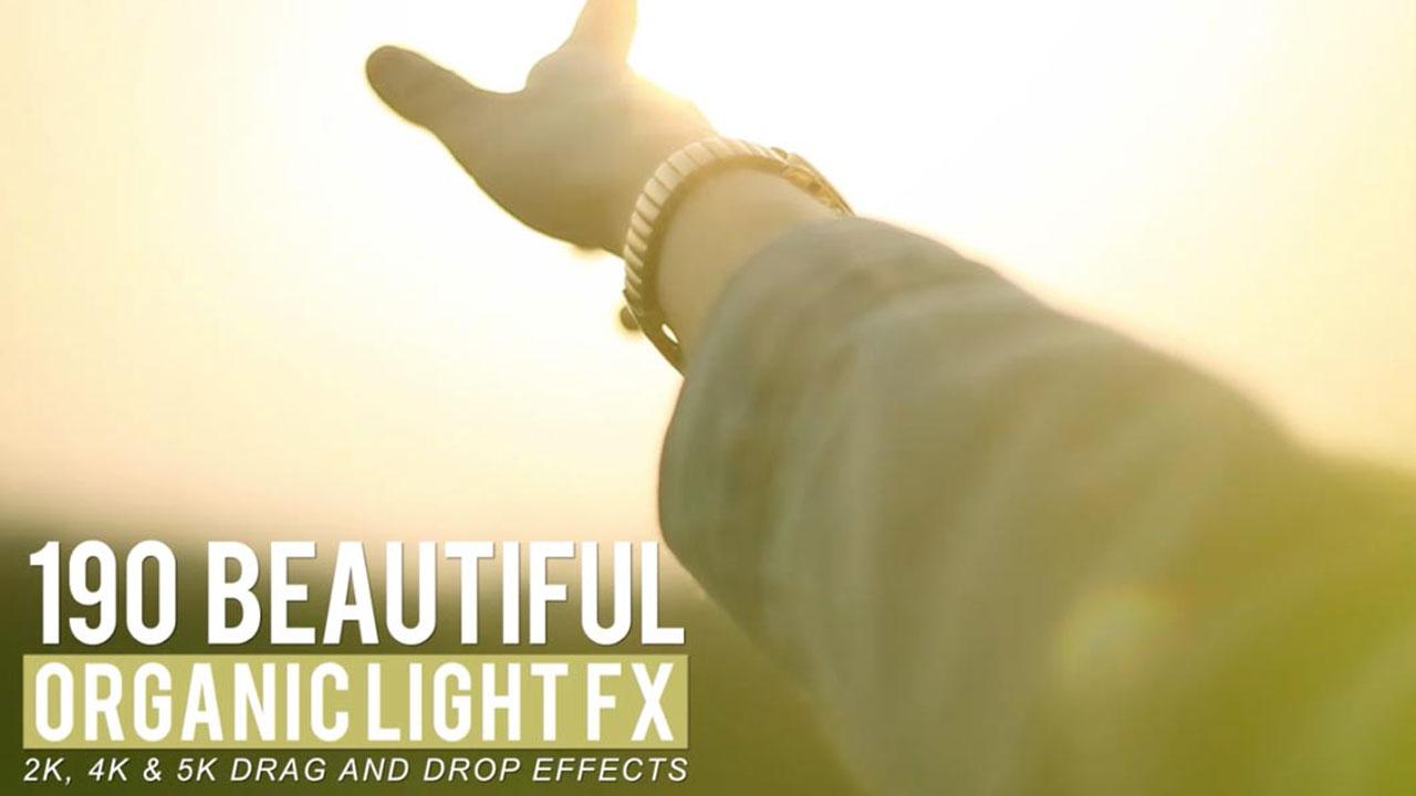 rampant beauty light