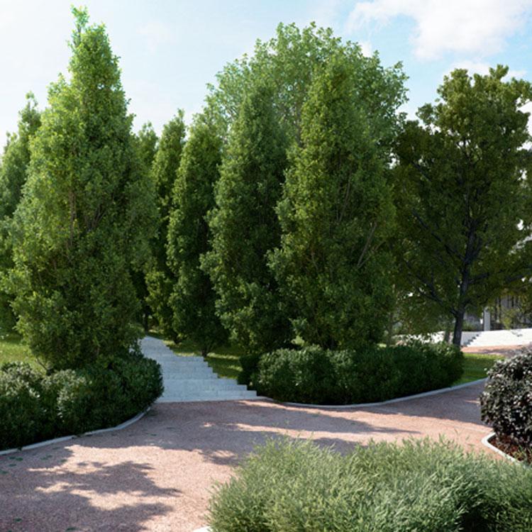 Laubwerk Plants Kit 1 - Temperate Deciduous Trees