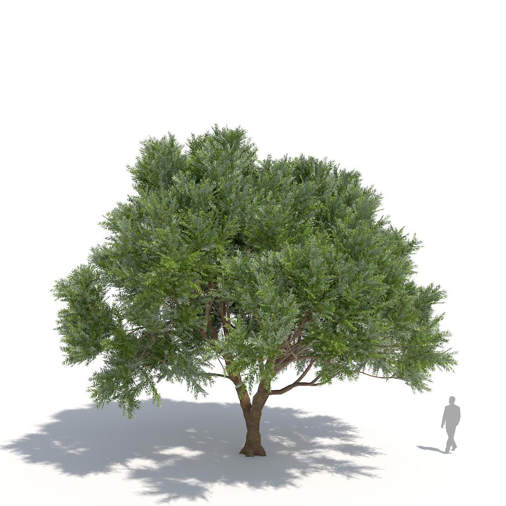 laubwerk willow