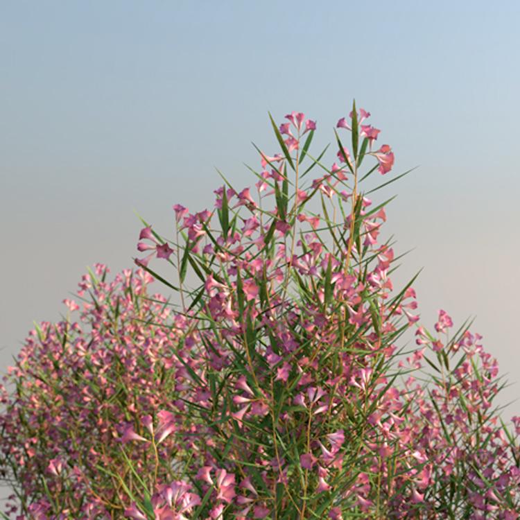 laubwerk plants kit 14