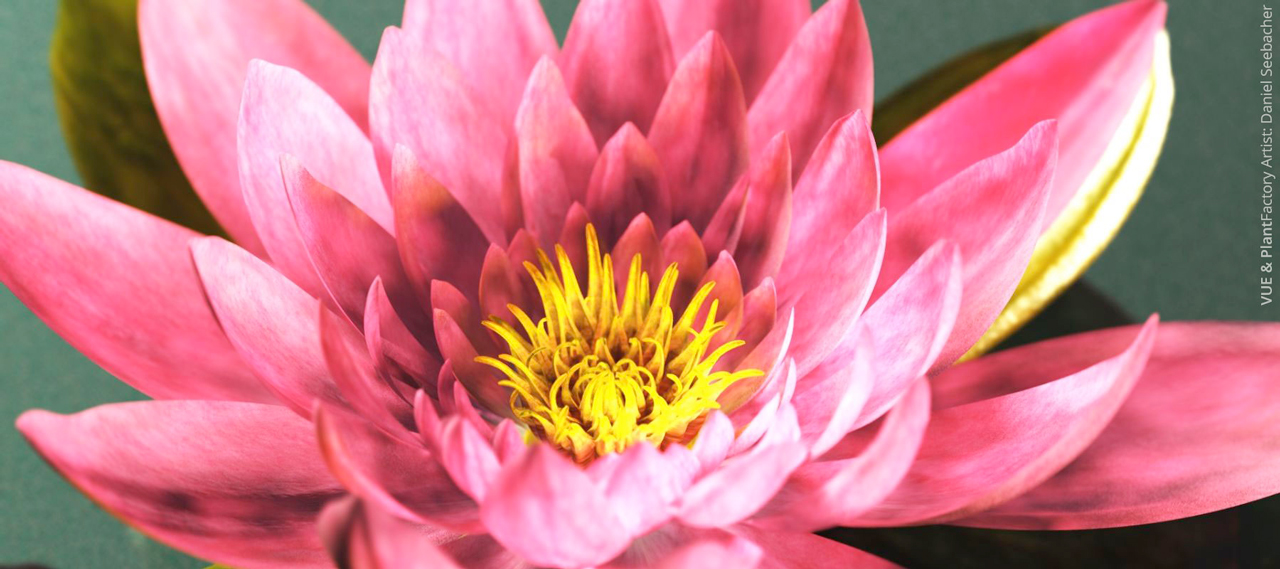 e-on software plant factory water lily macro