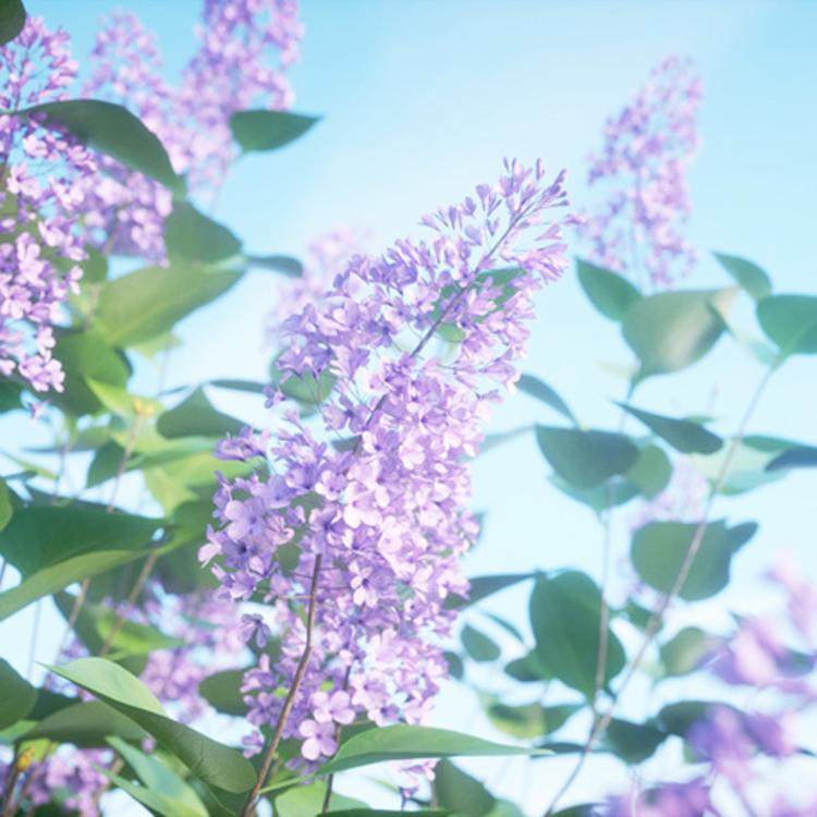 Laubwerk Plants Kit 9 - Temperate Shrubs - Toolfarm