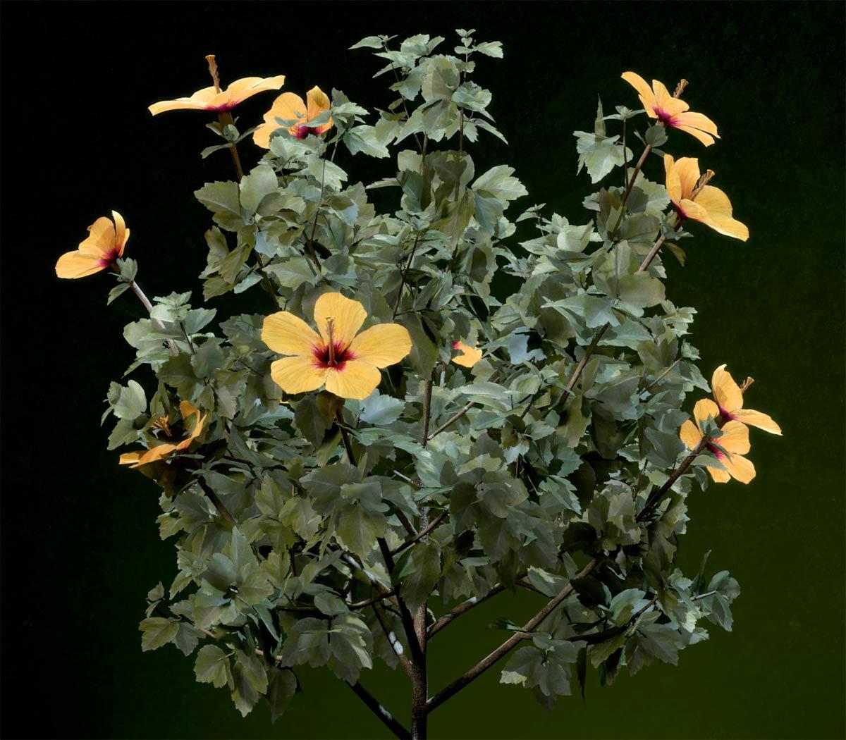 xfrog volume 2 flowers