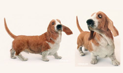 Creating a Realistic Basset Hound in Maya using Zbrush, Shave and a Haircut, and Arnold