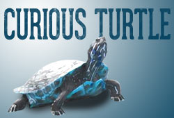 Sale!  25% off All Curious Turtle Training Through August 4, 2014