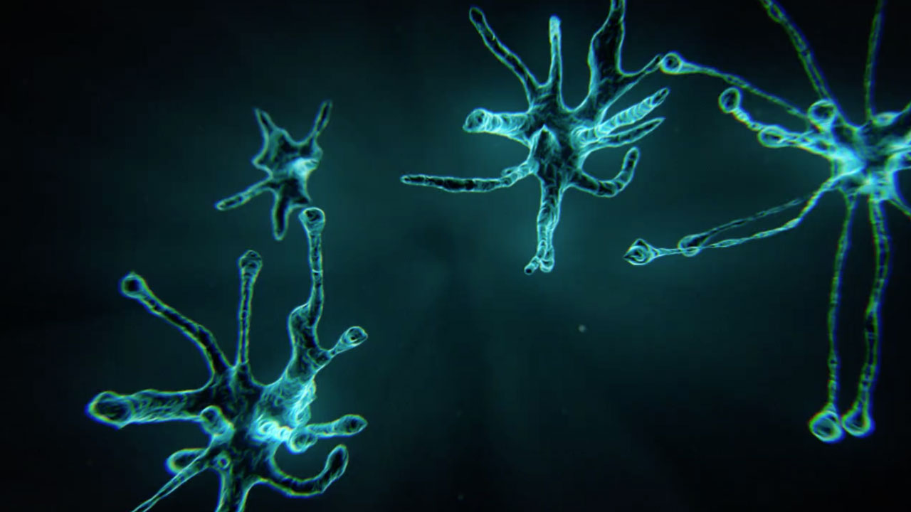 Growing Neurons / Dendrites Using X-Particles in Cinema 4D